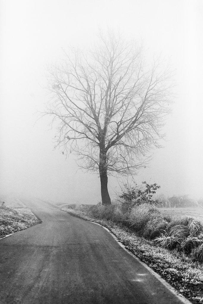 nebbia-9994-Modifica.jpg